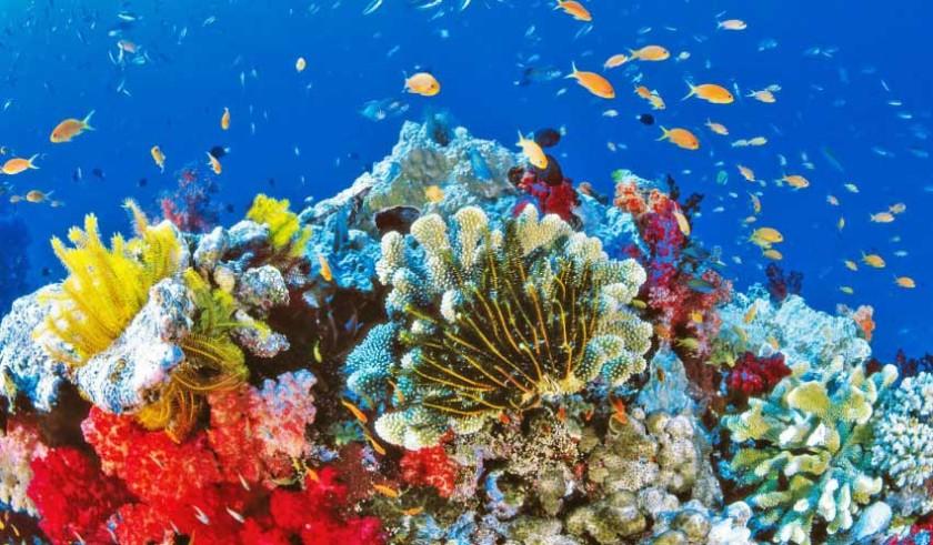los expertos consideran que los gobiernos deben implementar la restauración de arrecifes,