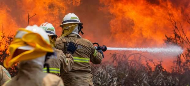 Más de 60 personas han muerto en un incendio forestal de Portugal