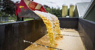 Trece países europeos han recibidos huevos contaminados con fipronil