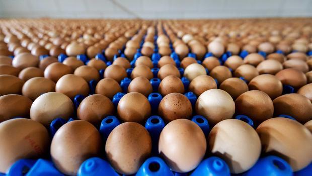 Ámsterdam conocía la existencia del tóxico en los huevos desde mediados de noviembre de 2016 y no advirtió de ello a los países vecinos